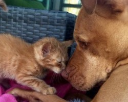 This Friendly Pooch Adores His Kitten Sister and Seeing Them Together Will Melt Your Heart