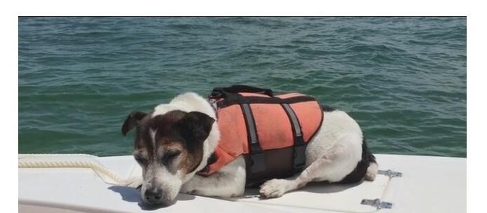 dog survival
