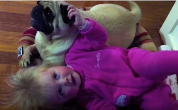 pug with baby