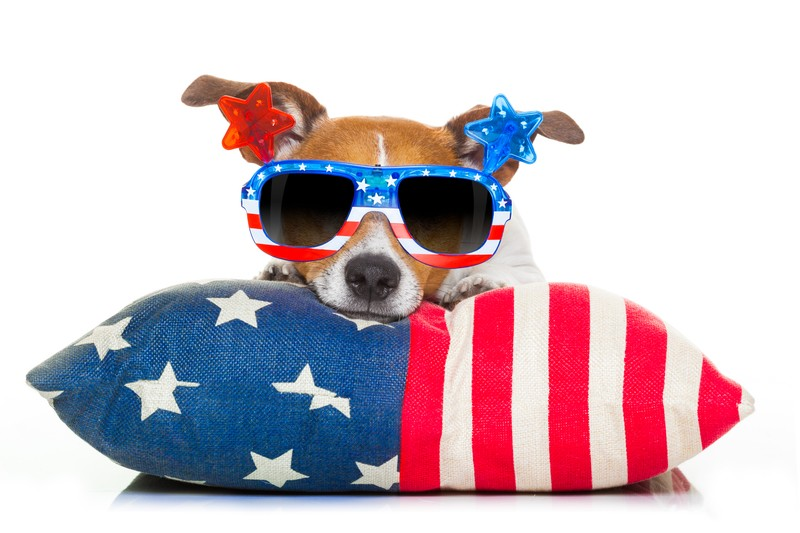 4th of July dog on pillow
