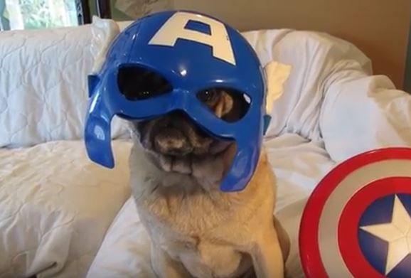 Super Hero Pug
