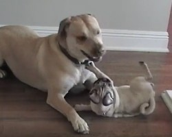 (VIDEO) Two Doggie BFF's That'll Make You Want to Call Up Your BFF Right Away