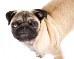 Are You Making This Common Error When Your Dog is Being Naughty?