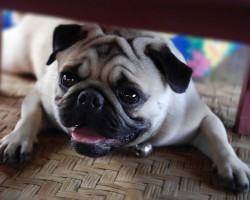 The 7 Things You're Doing That Is Shortening Your Dog's Lifespan