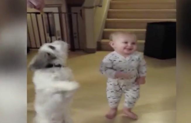 pug baby twirl