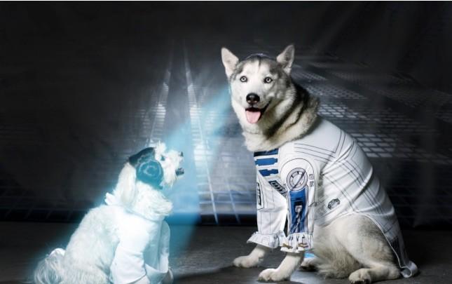 star pups