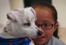 (VIDEO) A Deaf Dog and Girl's Bond is VERY Touching. Now be Amazed When the Girl Teaches Her Dog Sign Language!
