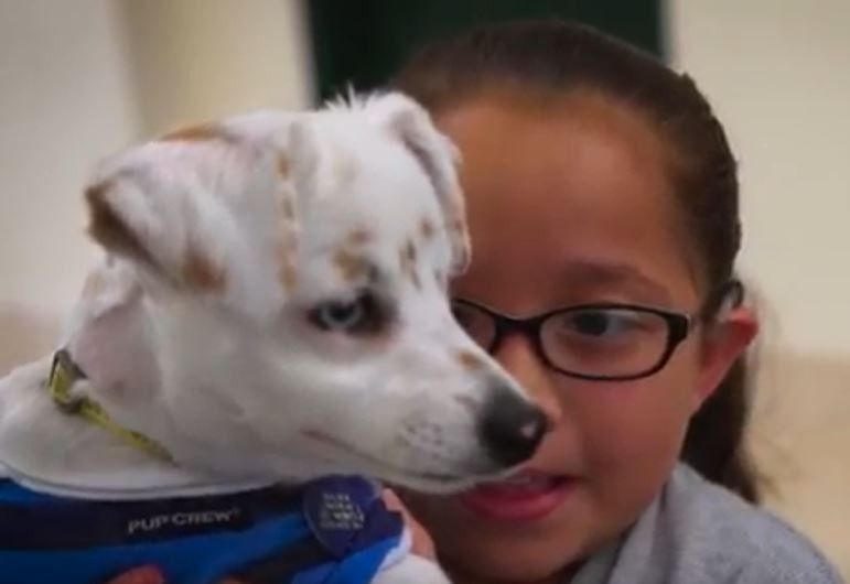 Deaf Girl and Dog
