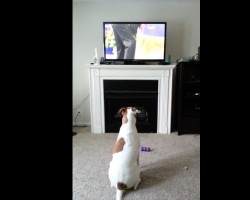 (VIDEO) This Doggie is Watching The Westminster Dog Show. Now Listen to the Outrageous Sounds He Makes!
