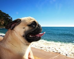 How to Actively Protect Your Pooch From the Summer Heat