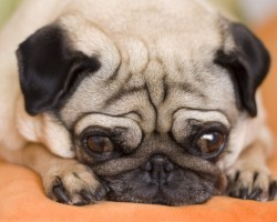 4 Natural Ways to Treat Your Dog's Anxiety