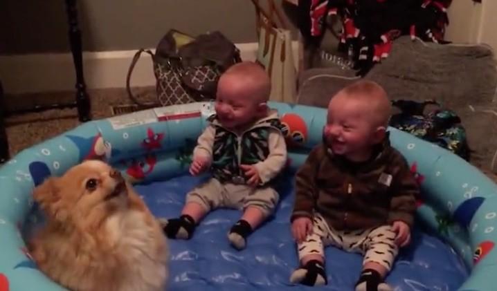 twins and dog