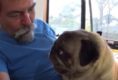(Video) Dad Decides to Play a Kissing Game With His Pug. Now Watch This Adorable Kissing Match Unfold!