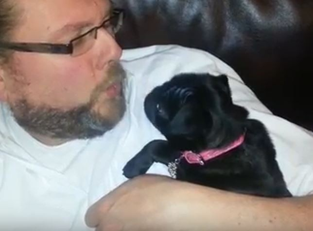 Dad blowing on Pug
