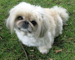 10 of the Smallest Dogs in Existence
