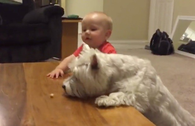 dog and baby vs chicken