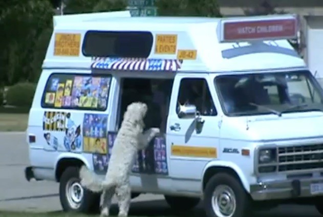dog ice cream truck