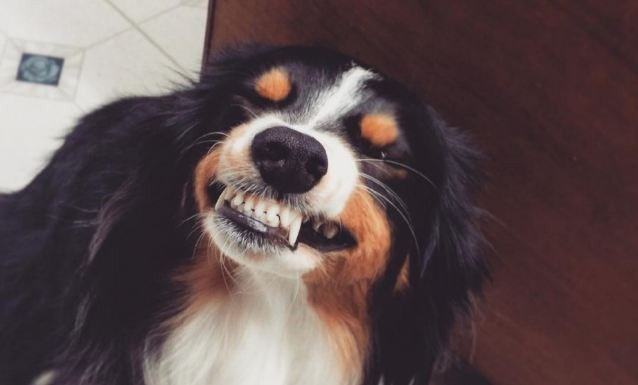 doggie smiling saying cheese