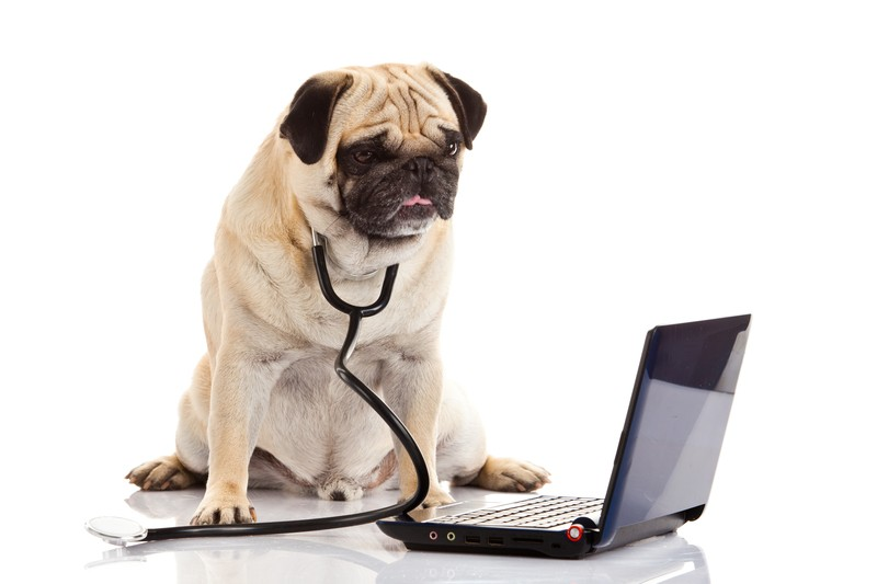 research pug