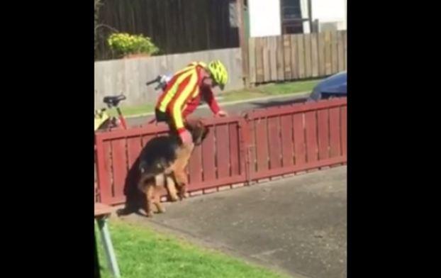 mailman greeting dog