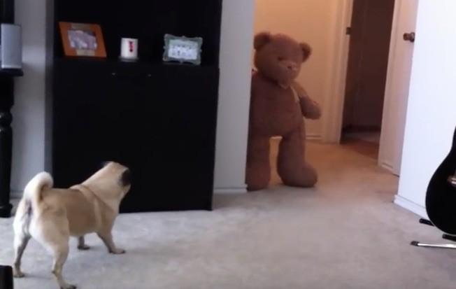 pug and bear