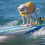 6 Dogs Who Love to Surf (and Their Inspiring Stories)!