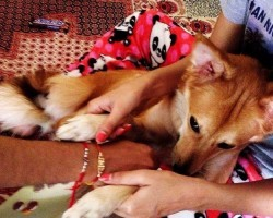 Woman Said No Way to an Arranged Marriage Because He Wanted Her to Give Up Her Dog