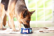What a Dog Owner Can Do if She Has a Picky Eater