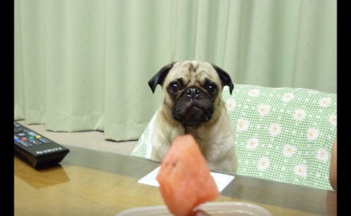 puglet with fruit