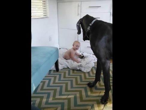 big-dog-and-baby