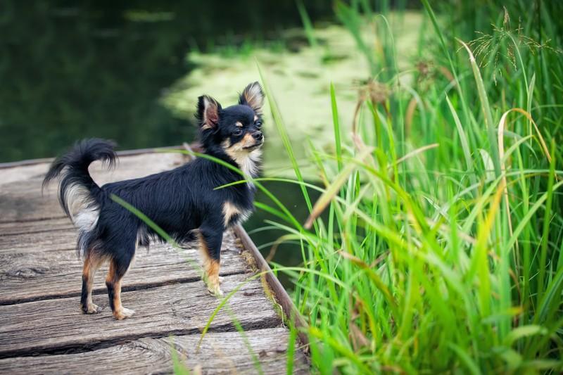 dog near lake