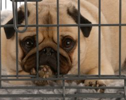 Doggie Owners Shouldn't Leave Their Dogs at Boarding Facilities Until They Check THIS Out
