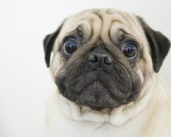 6 Things Dog Owners Do That Unintentionally Breaks Their Dog's Heart