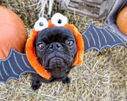Here's How to Ensure Fido Has a Spook-Free Halloween!