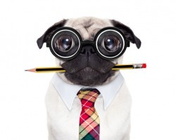 4 Doggie Breeds Brag How Smart They Are