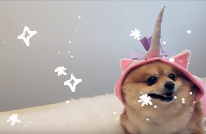unicorn dog
