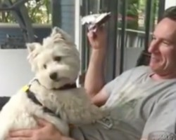 (Video) This Westie Adores Her Daddy. Now Watch to See How She Sweetly Gives Him Kisses… On Command!