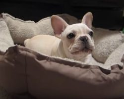 (Video) This Doggie Just Got Woken Up. Just How Unhappy He is About It? LOL, Better Watch Out!