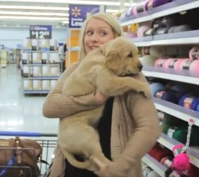 shopping-cart-pup