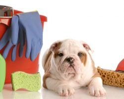 Why Vinegar Should be Used to Everyone's Advantage as a Way to Keep a Doggie and House Clean
