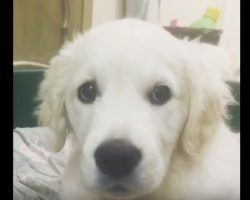 (Video) This Sweet Puppy isn't Sure What to Think of Her Hiccups!