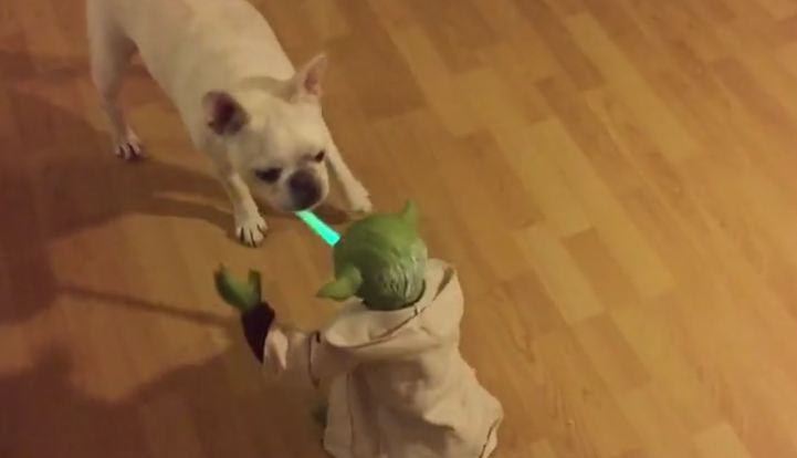 yoda-and-dog