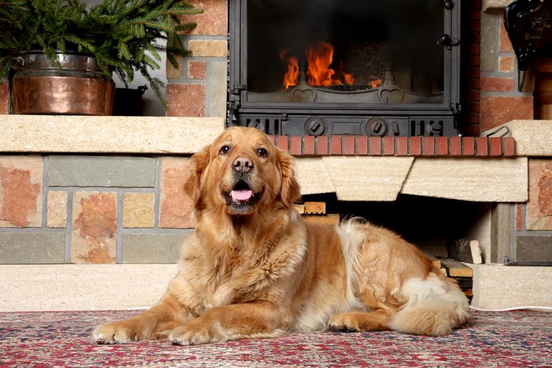 dog-by-fireplace
