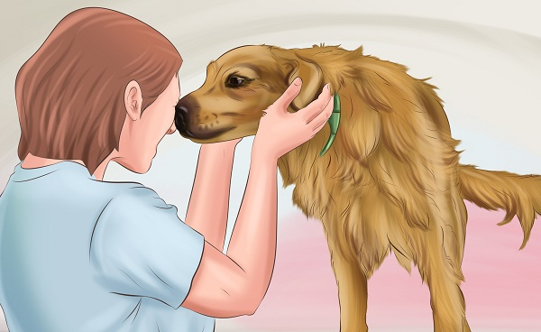how-to-make-dogs-love-you