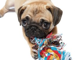 5 Doggy Toys and Treats for the Dog Who Loves to Chew Everything