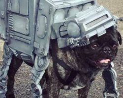 Pugs Gather for Epic Star Wars Parade to Raise Money