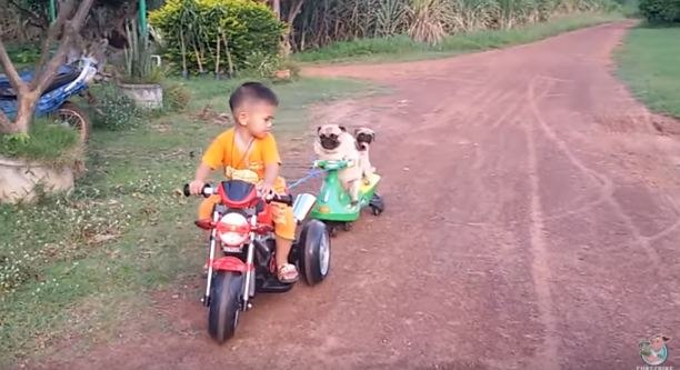 pugs-on-motorcycle