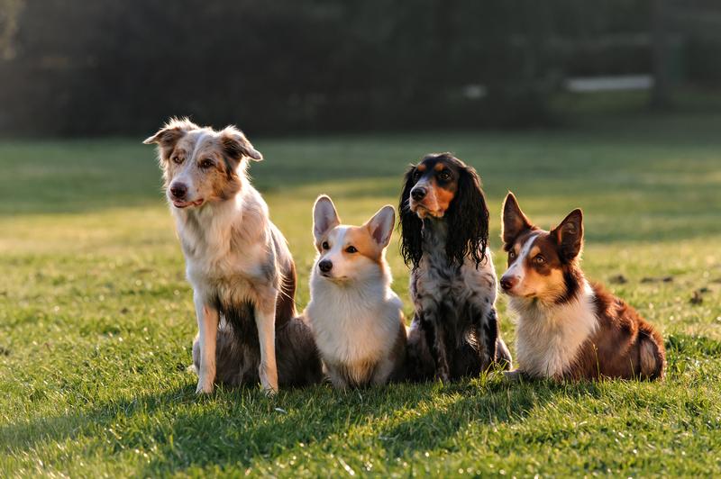 training-doggies