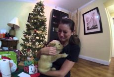 (Video) Wife Gets the Best Surprise During Christmas and the Meeting Will Bring Anyone to Tears…