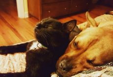 Dog and Cat Rescued Just a Day Apart Are Inseparable Now